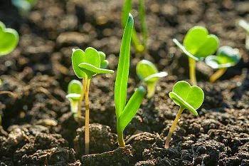 Resultado de imagen de imagen de esparcir semilla